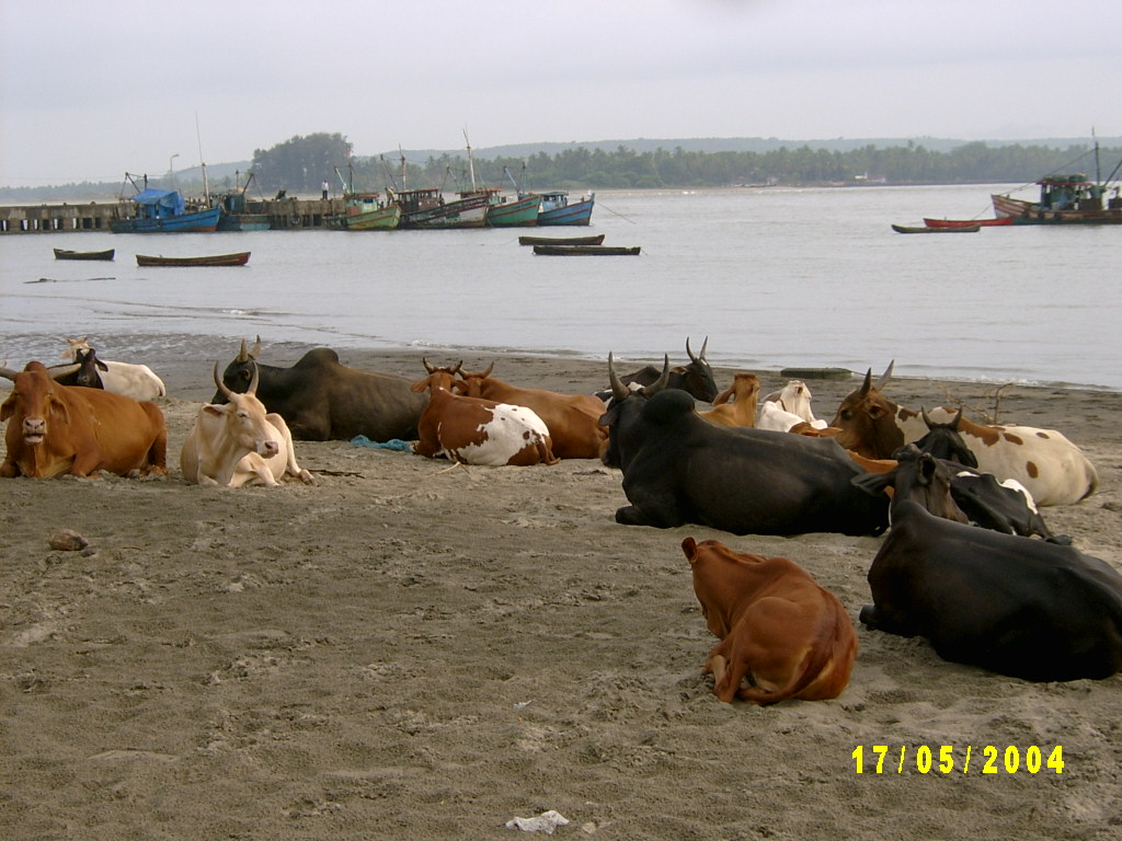 Shapora Fishing Port
